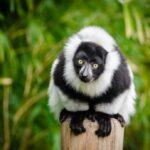 VIAJE MADAGASCAR