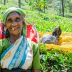 viaje sri lanka con Anglo Indiago Travels