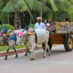 chettinad tamilbadu viaje india